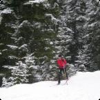 The Skiwolf Heads to Sochi